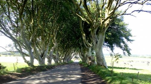 9) The Dark Hedges Game of Thrones